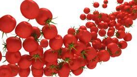 Flusso della ciliegia dei pomodori isolato sopra bianco Fotografia Stock