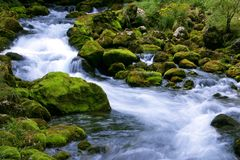 Flusso della foresta Immagini Stock