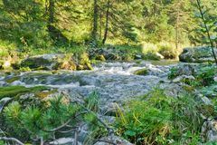 Flusso della foresta Fotografia Stock