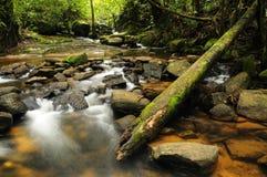 Flusso della foresta Immagine Stock
