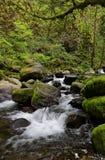 Flusso della foresta Fotografia Stock Libera da Diritti