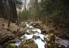 Flusso della foresta Fotografie Stock Libere da Diritti