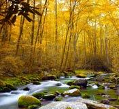 Flusso della foresta in autunno Fotografia Stock Libera da Diritti