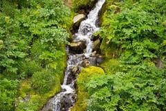 Flusso della foresta delle alpi Immagini Stock