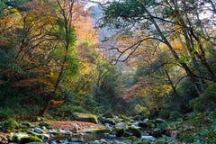 Flusso della foresta di autunno Fotografia Stock