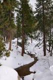 Flusso della foresta di inverno Fotografia Stock Libera da Diritti