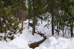 Flusso della foresta di inverno Immagini Stock Libere da Diritti