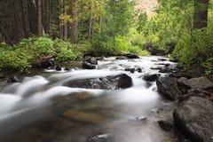 Flusso della foresta in montagne della California Immagine Stock