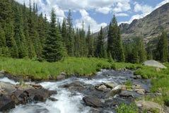 Flusso della foresta in montagne rocciose del Colorado Fotografia Stock Libera da Diritti