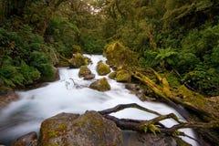 Flusso della foresta pluviale Immagini Stock