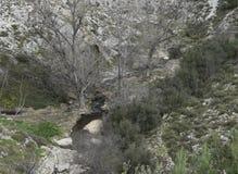 Flusso della montagna Il fiume in montagne Immagini Stock Libere da Diritti