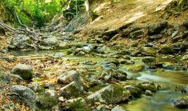 Flusso della montagna nel legno Immagini Stock