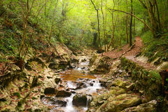 Flusso della montagna nella foresta Fotografie Stock