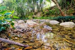 Flusso della montagna in una foresta Fotografie Stock