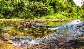 Flusso della montagna in una foresta Immagini Stock
