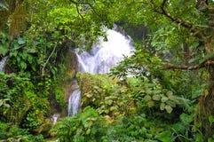 Flusso di acqua di caduta in una foresta densa Fotografie Stock Libere da Diritti