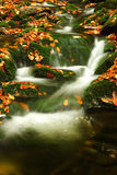 Flusso di autunno in montagne giganti Immagini Stock
