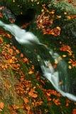 Flusso di autunno in montagne giganti Fotografia Stock