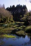Flusso di Hamurana Fotografie Stock