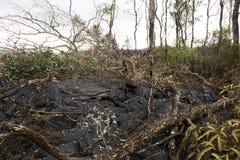 Flusso di lava in Hawai, che hanno bruciato gli alberi e gli arbusti Immagini Stock Libere da Diritti
