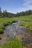 Flusso di pesca dell'alta montagna Immagini Stock Libere da Diritti