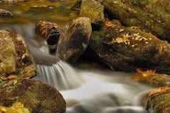 Flusso di Taiga. Fotografie Stock Libere da Diritti