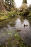 Flusso e fauna selvatica Immagini Stock Libere da Diritti