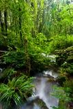 Flusso e foresta pluviale alla sosta nazionale di Intanon Fotografia Stock