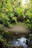 Flusso in foresta Immagini Stock Libere da Diritti