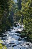 Flusso in foresta verde Fotografia Stock