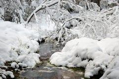 Flusso in legno di inverno Fotografia Stock Libera da Diritti