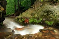 Flusso in montagne di Jeseniky Fotografia Stock Libera da Diritti