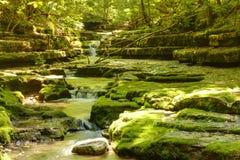 Flusso nella foresta Fotografia Stock