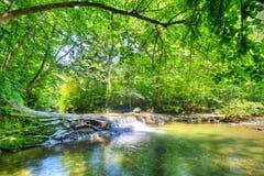 Flusso nella foresta Fotografie Stock