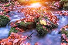 Flusso nella foresta di autunno Immagini Stock Libere da Diritti