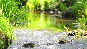 Flusso nella foresta tropicale stock footage