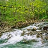 Flusso nella sosta nazionale delle grandi montagne di Smokey immagine stock
