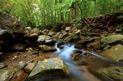Flusso pacifico del terreno boscoso Fotografia Stock Libera da Diritti