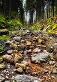 Flusso scorrente nella foresta Fotografie Stock