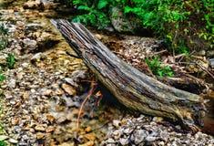 Flusso scorrente nella foresta Fotografia Stock