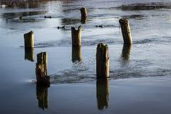 Flusso tranquillo del fiume Fotografia Stock