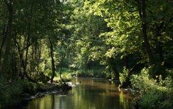 Flusso in una foresta densa Immagini Stock