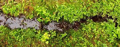 Flusso verde Immagini Stock
