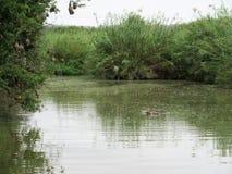 Flusspferd im Pool Lizenzfreie Stockfotos