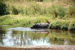Flusspferd im Serengeti Stockfotos