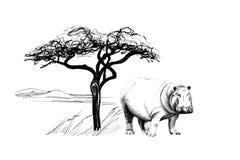 Flusspferd nahe einem Baum in Afrika Hand gezeichnete Abbildung stock abbildung