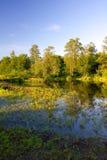 Flussquerneigung im Wald Stockfotos