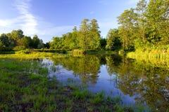 Flussquerneigung im Wald Stockfoto