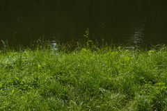 Flussseeseenatur-Hintergrundlandschaft des grünen Grases lizenzfreie stockfotos