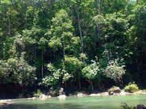 Flussseitenwald Stockfotos